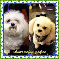 Nina grooming before and after